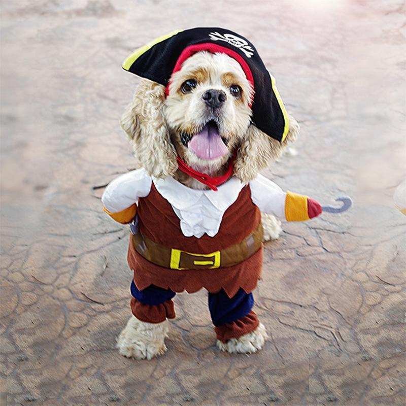 Funny Pet Costumes - PAPA BEAR HOME