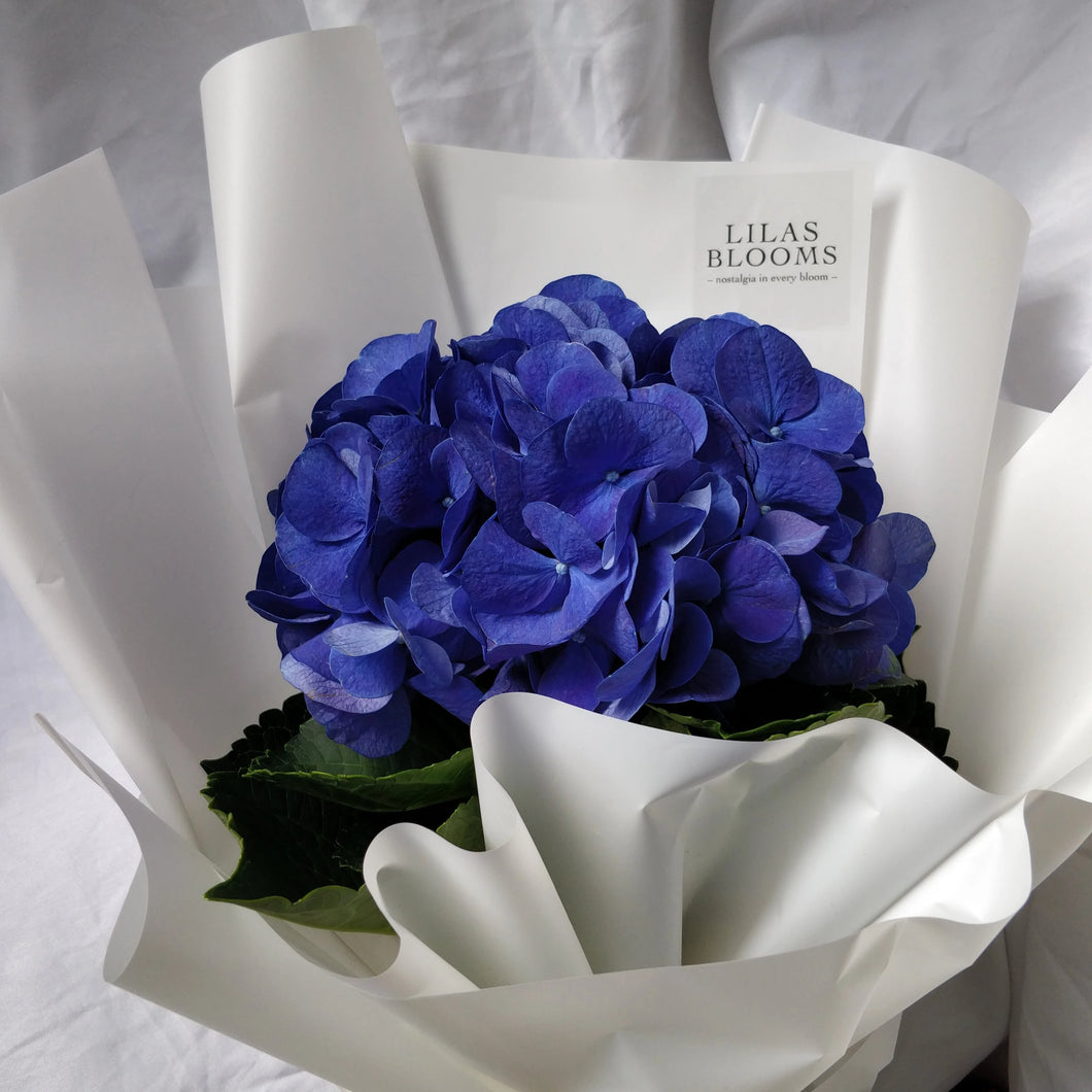 Hydrangeas Bouquet from LilasBlooms