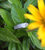 Sea Shell Titanium Ring - Hawaii Titanium Rings  - 5