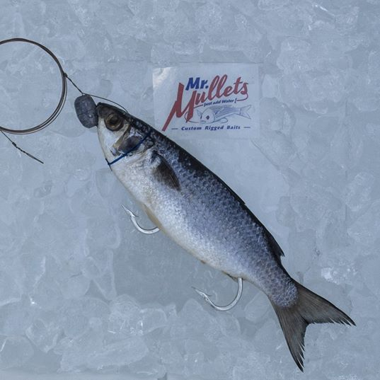 Large Mullet (Blue Floss): 10 1/2 -12 inches | 10pk