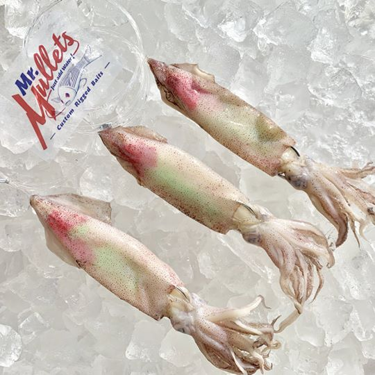 Rigged Colored Squid: 6-10 inches | 3 per pk x10 pks 30 total squid