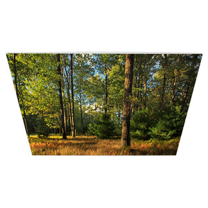 500 Watt Far Infrared Printed Aluminium Panel Heater | Mountain Top Forest