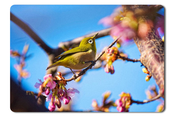 Mouse Pad Japanese Birdwhite Eye Nature Flowers Spring Blue Sky - 21.5 x 27 x 0.3cm