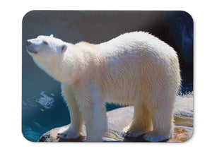 Mouse Pad Polar Bear Hd  - 21.5 X 27 X 0.3cm