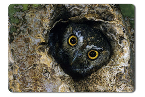 Mouse Pad Owl Hiding In The Branch - 21.5 X 27 X 0.3cm