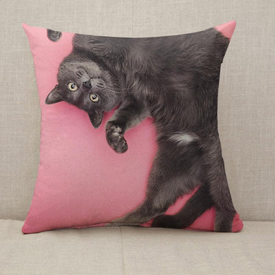 Grey funny cat posing pink Throw Pillow [With Inserts]
