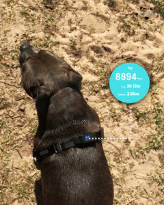 Pet fitness tracker. - Furry Legs