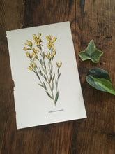 Load image into Gallery viewer, vintage botanical bookplate