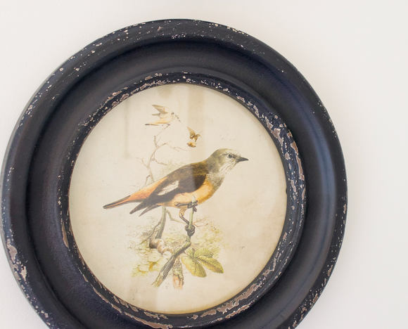 Round Framed Bird Art (4 Picture Set)