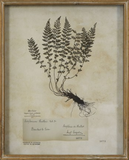 Wood Shadow Box Fern Art