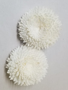 Chrysanthemum  - 2""