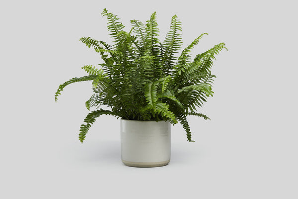 Planter (White/Raw)
