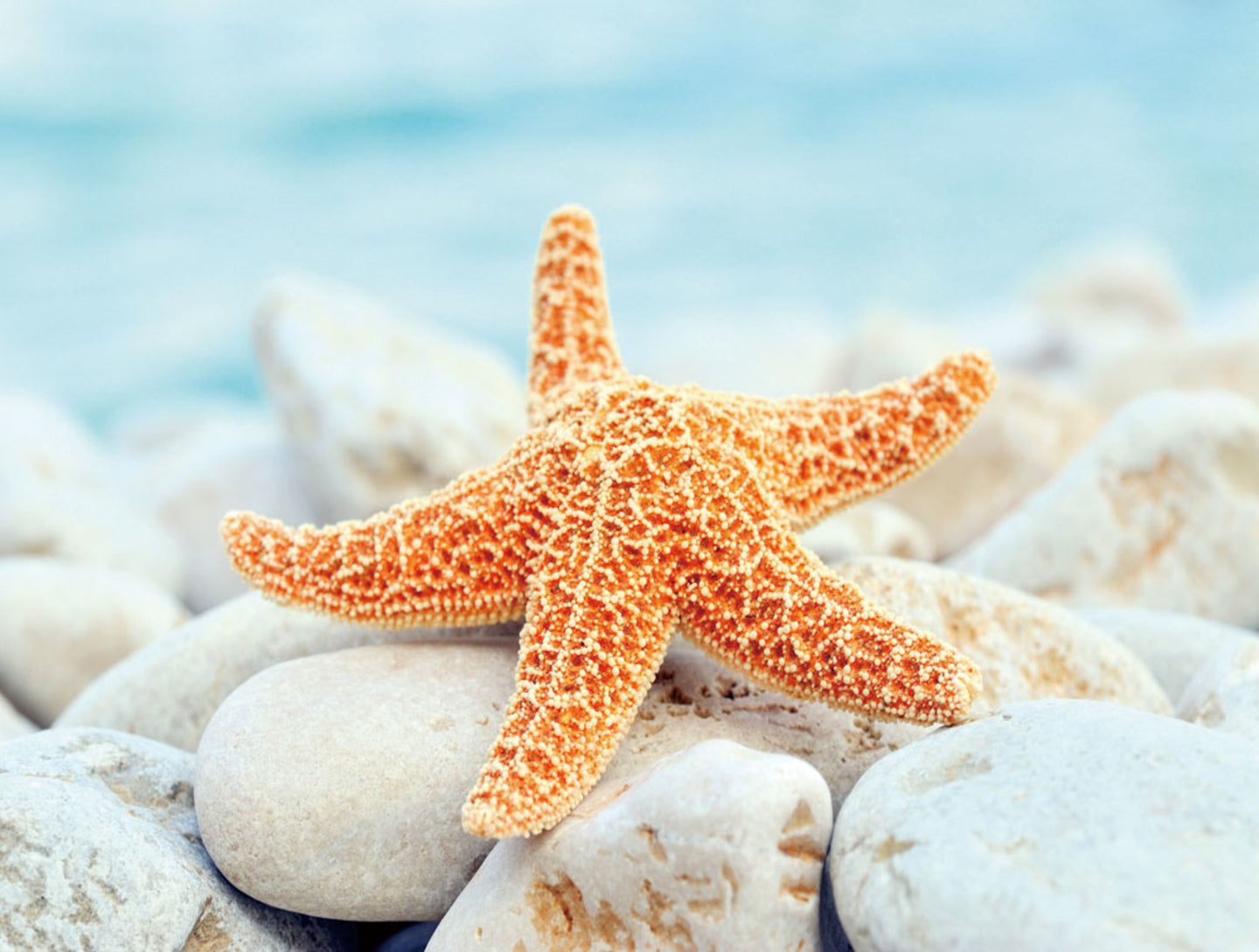 Cortesi Home Sea Star Dreams Tempered Glass Wall Art, 12