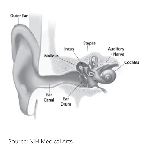 Diagram of the ear with different parts called out