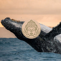 A Relaxing Guided Meditation For Sleep With Whales