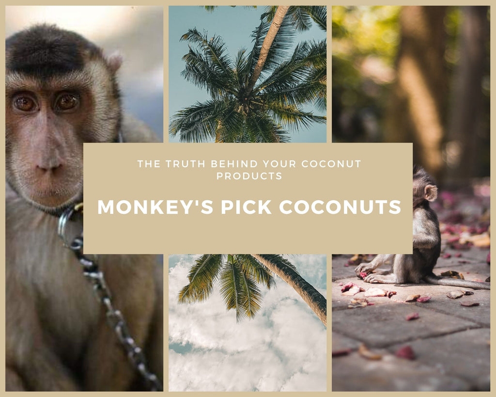 Monkeys Pick Coconuts: The Truth Behind Our Favourite Coconut Brands