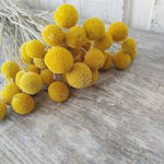 Billy Balls - Natural Gold -Dried - 3 oz - sola wood flowers wholesale