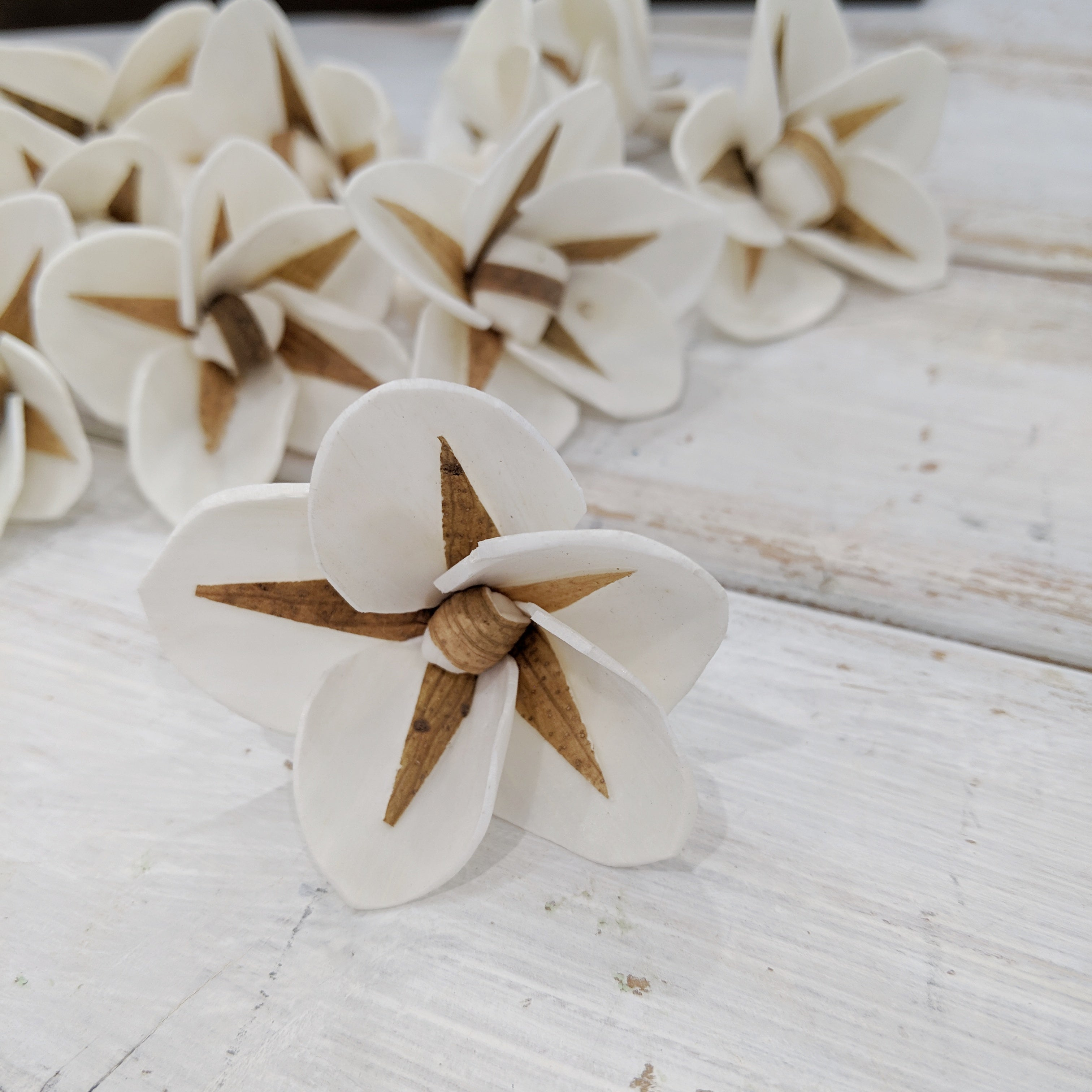 North Star- multiple sizes available - sola wood flowers wholesale