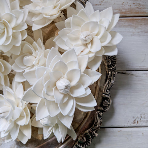 Dahlia- multiple sizes available - sola wood flowers wholesale