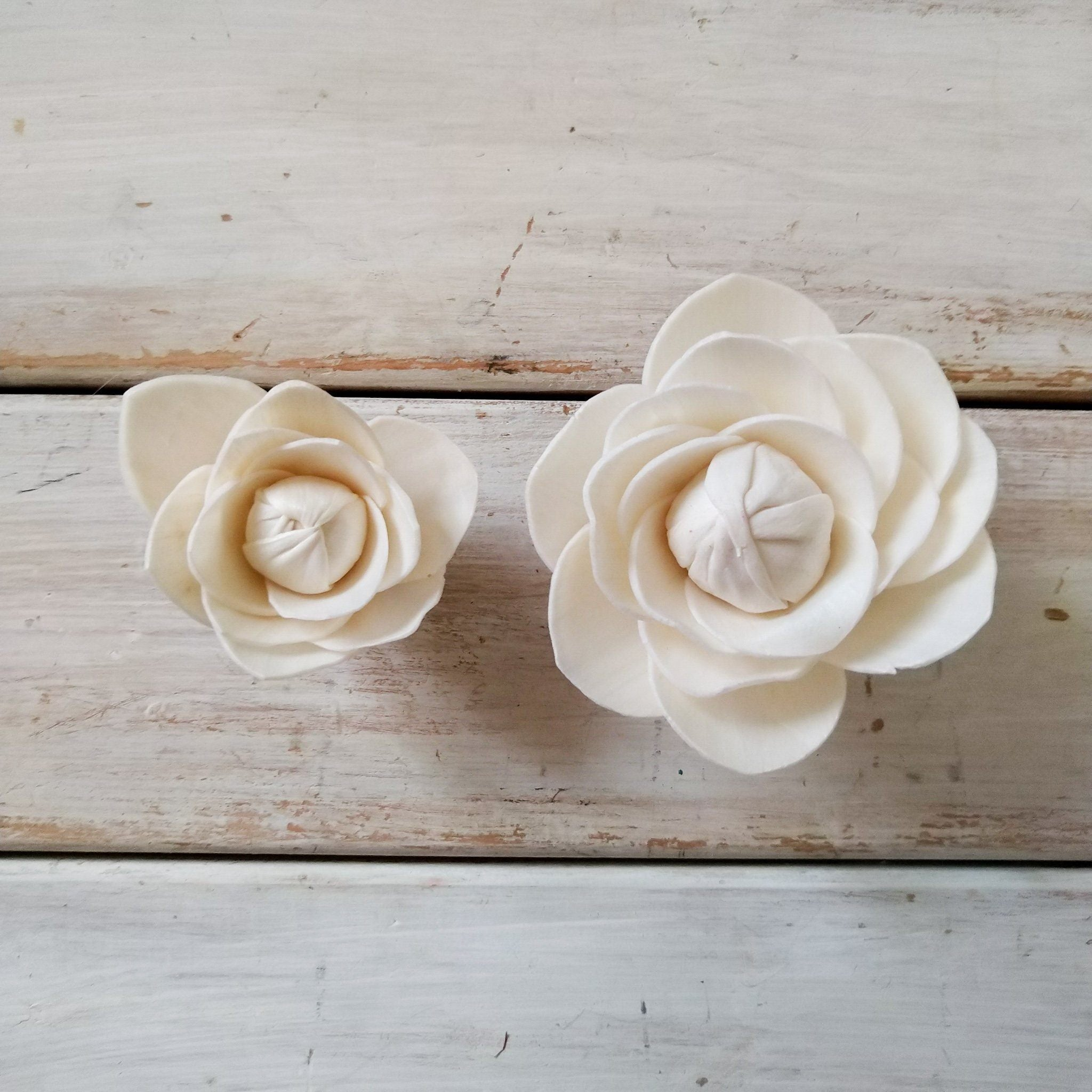 Camellia  - set of 12-  multiple sizes - sola wood flowers wholesale