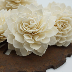 Miss Ivy - Bulk Wholesale 100 Pack - sola wood flowers wholesale