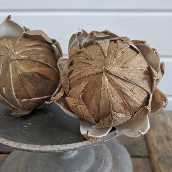 Bark Protea Flower - sola wood flowers wholesale