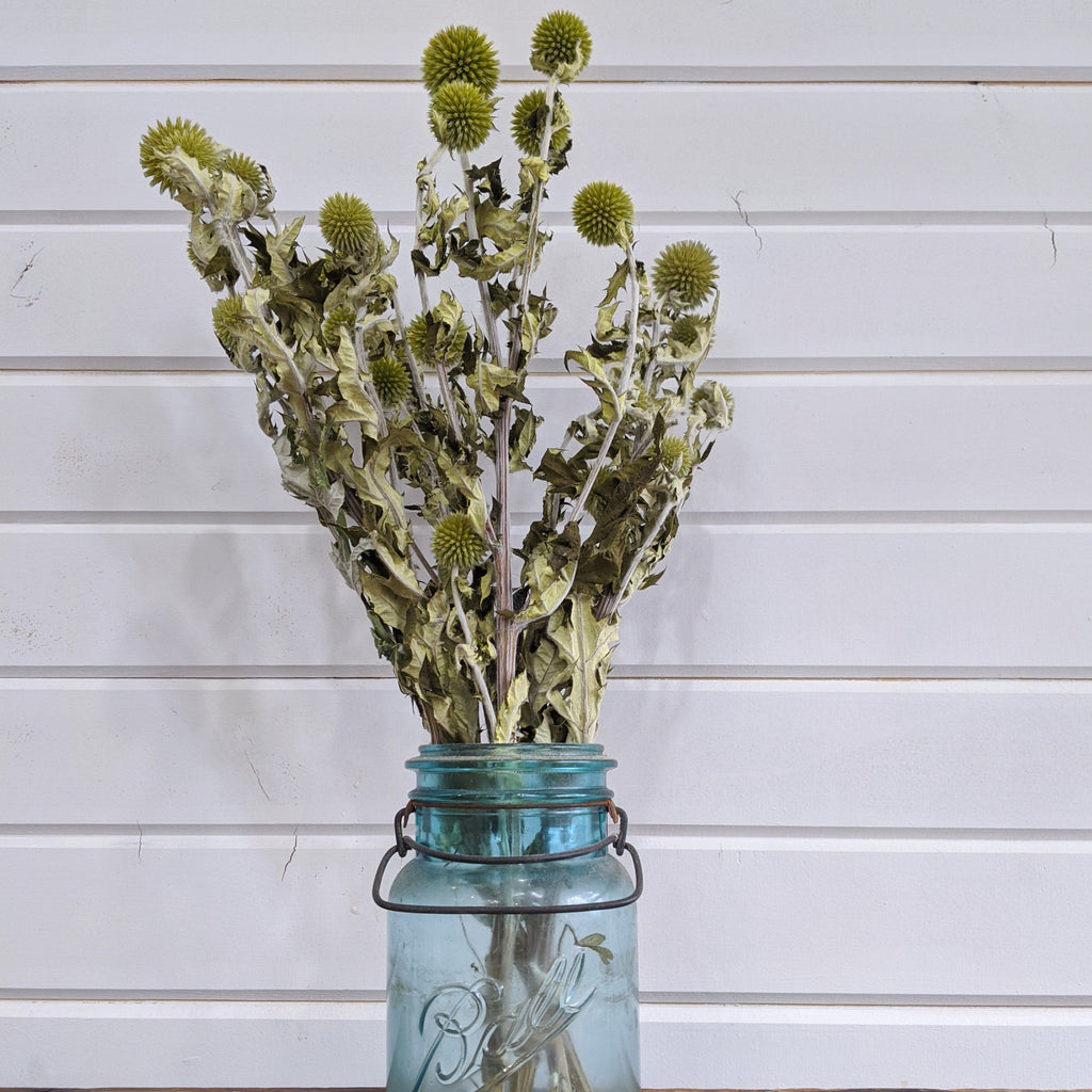 Green Echinops - Dried -4oz - sola wood flowers wholesale