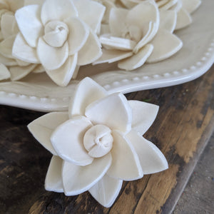 Little Star - Set of 12 - sola wood flowers wholesale