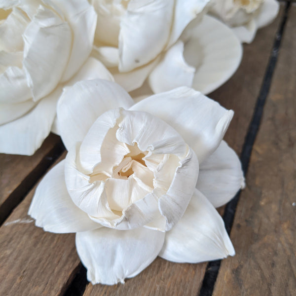 Matured Peony- set of 12 - multiple sizes - sola wood flowers wholesale
