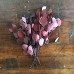Silver Dollar Eucalyptus -Preserved Burgundy - sola wood flowers wholesale