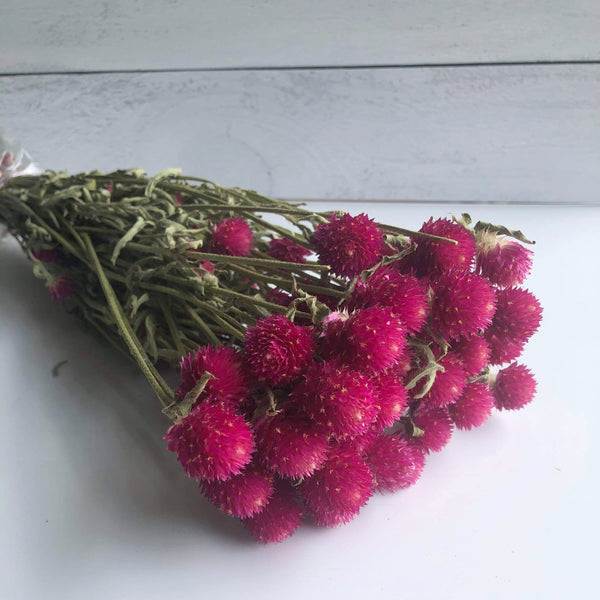 Globe Amaranth - fuchsia - Dried- 4oz - sola wood flowers wholesale