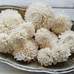 Zinny- Size Assortment- Set of 50 - sola wood flowers wholesale