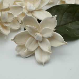 Jasmine - set of 12- multiple sizes available -