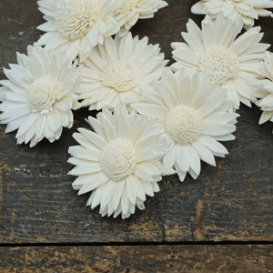 "Daisy- 1.5"" sold by the dozen - sola wood flowers wholesale"