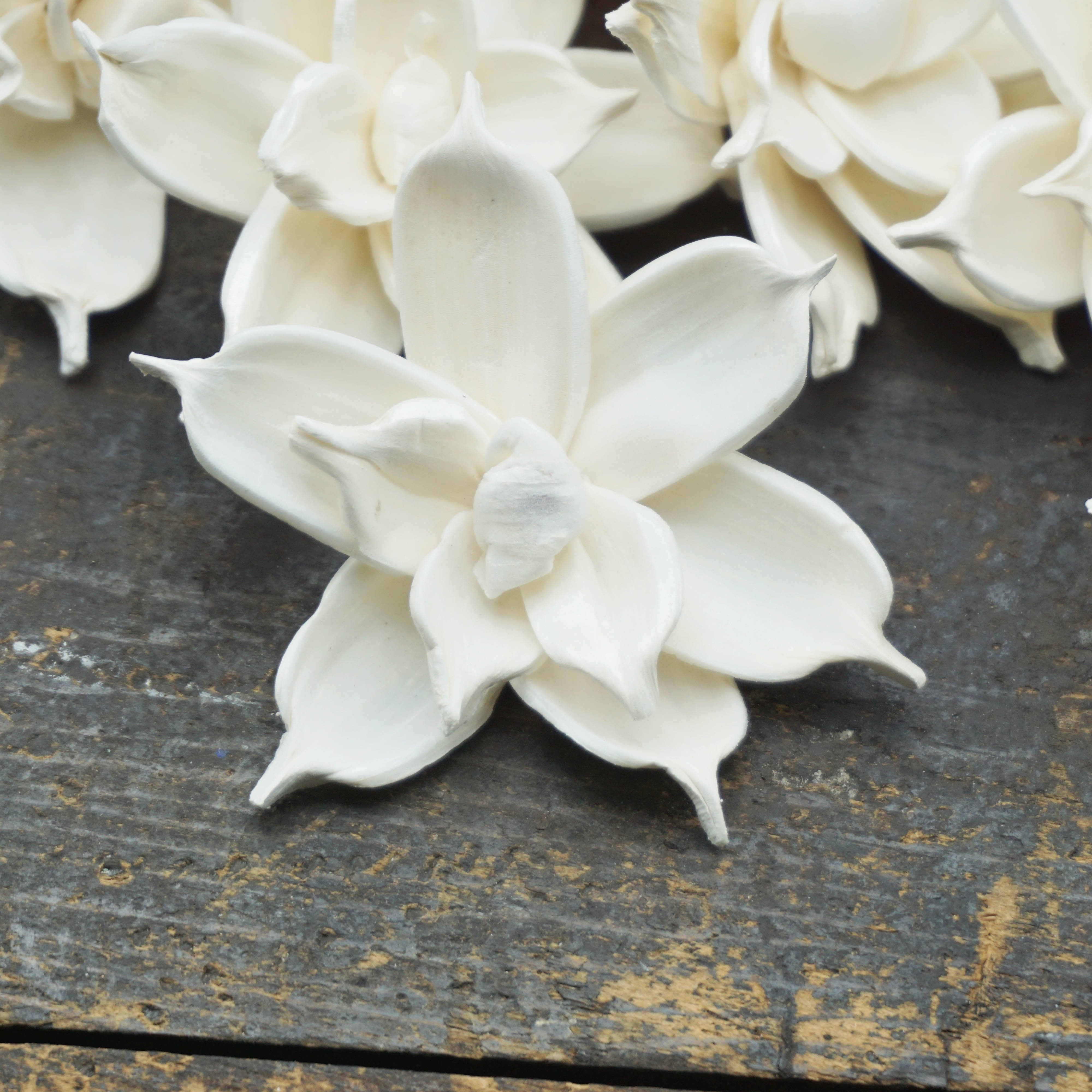 Jasmine - set of 12- multiple sizes available - - sola wood flowers wholesale