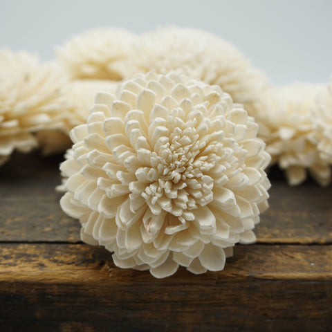Zinny - set of 12- multiple sizes available - - sola wood flowers wholesale