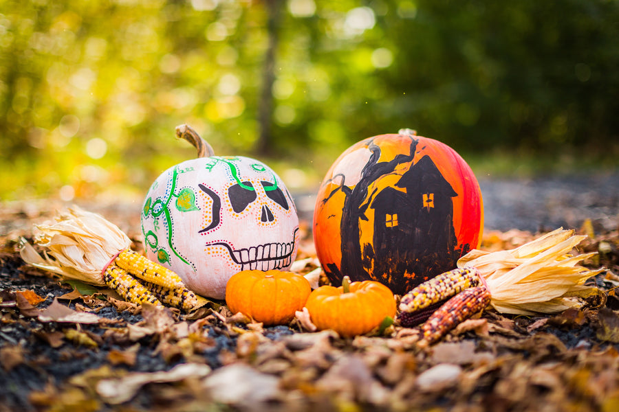 Six reasons why Aalgo is the best Halloween gift for any parent