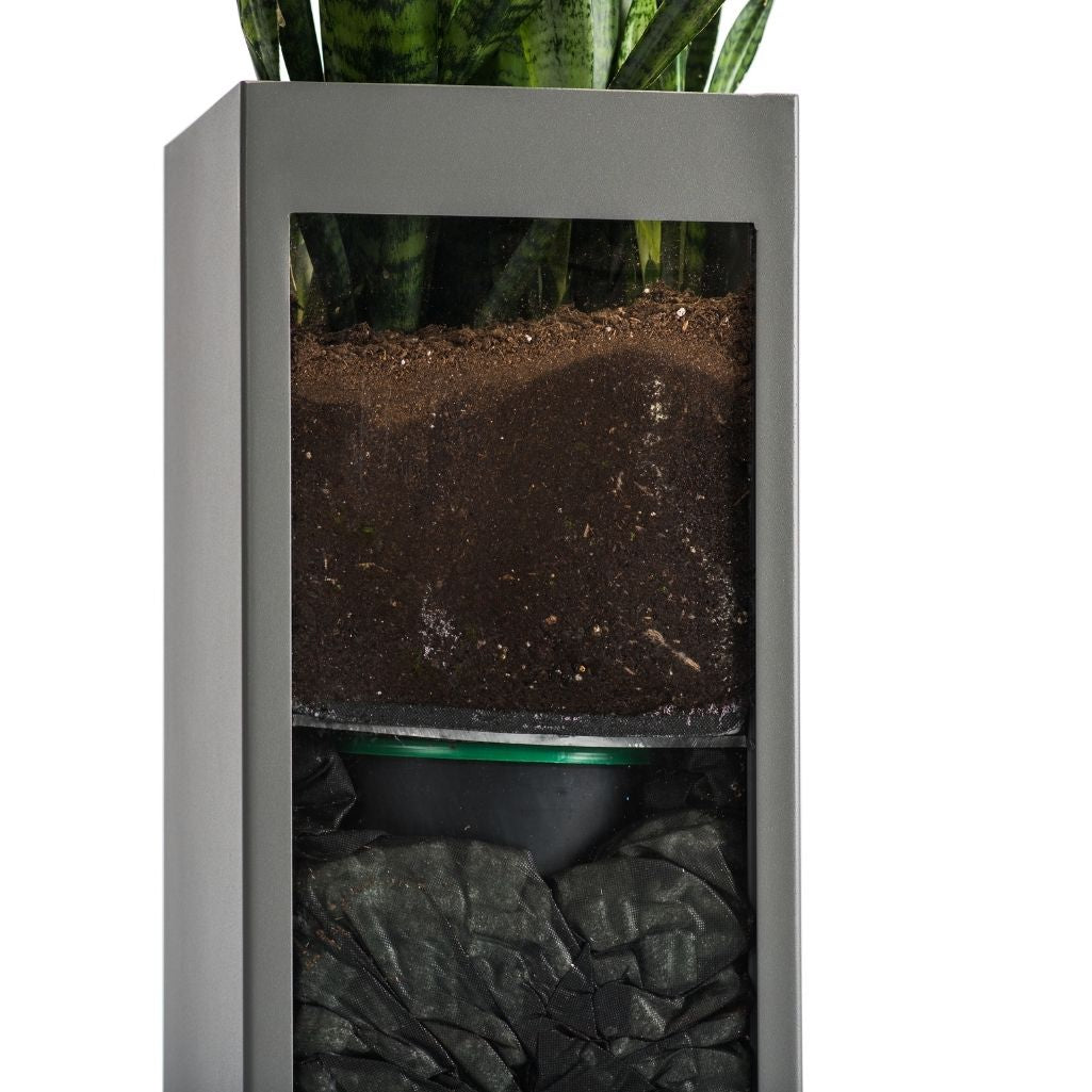 Plant Sipper in Planter