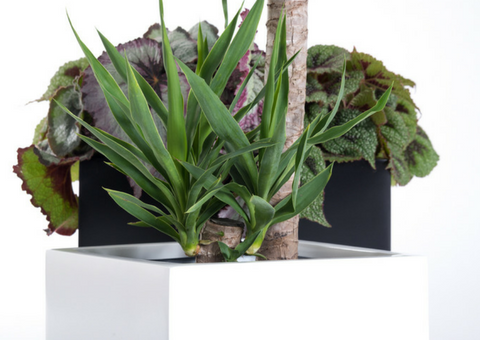 Fiberglass planter from PureModern