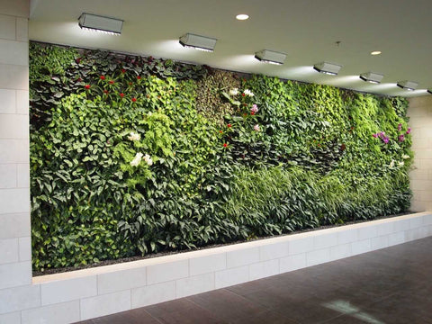 Modern Eco-design BioWall
