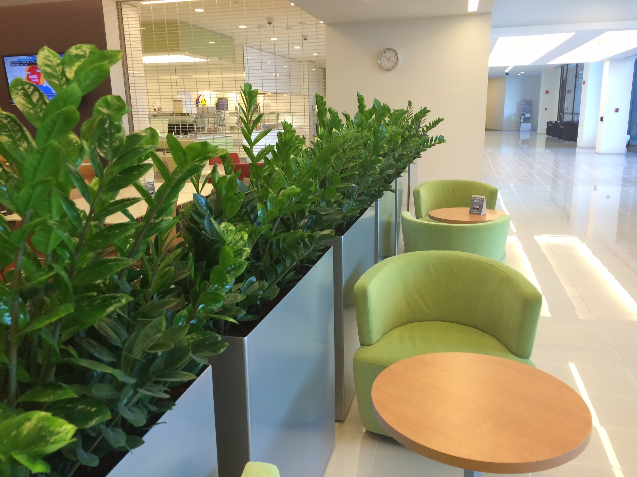 ZZ plant in Modern Elite indoor planters at National Cancer Institute