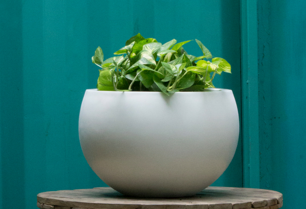 Cratera 1970 Round Fiberglass Planter with Plant