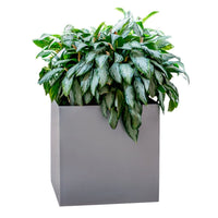 Modern Commercial Planters