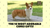 The 10 most adorable corgi gifts