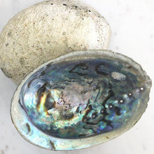 Load image into Gallery viewer, Abalone Shell Unpolished