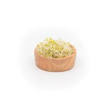 Broccoli Sprouts