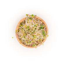 Organic Spicy Sprouts