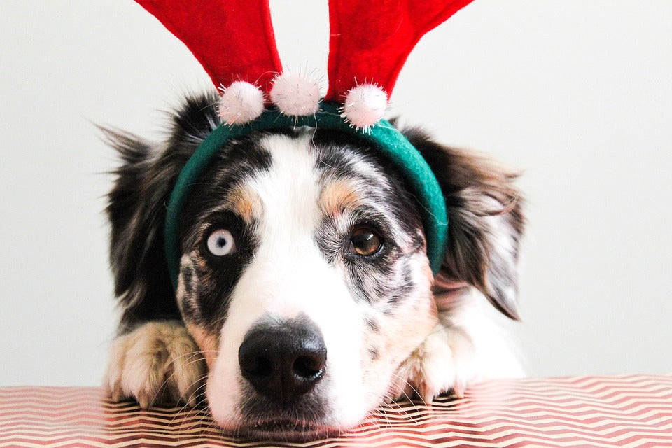 10 Pet Safety Tips for the Holidays (3 Min Read)