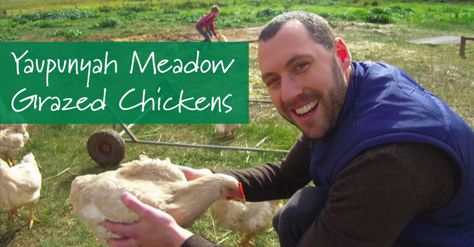 Our Pick: Yapunyah Meadow Grazed Chickens
