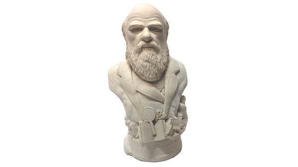 Plaster bust of Charles Darwin